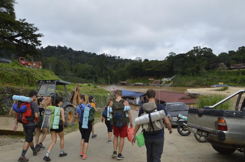 Na poti v deževni gozd