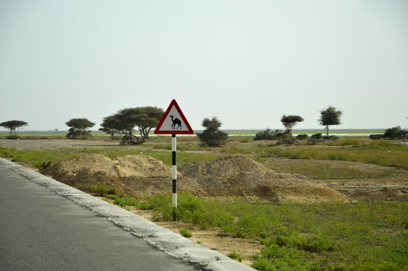 Pozor kamela