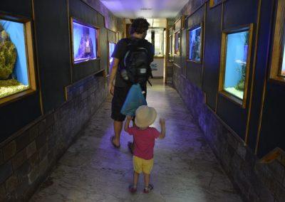Sirakuze, akvarij