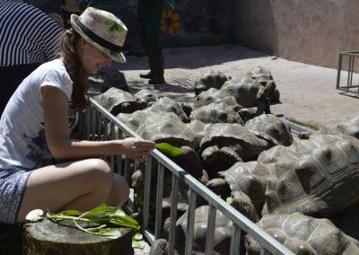 Hranjenje mladih želv, Vanilla Crocodile park
