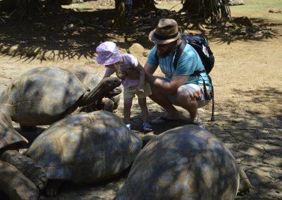 Velikanske želve v  Vanilla Crocodile parku
