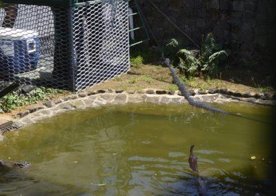Hranjenje krokodilov v Vanilla Crocodil parku