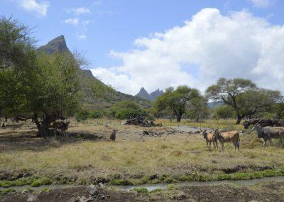 Safari v Casela nature park