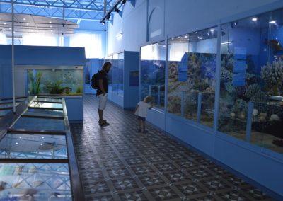 Zelo zanimiv muzej, Natural History muzej, Port Luis