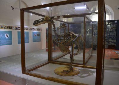 Dodo, Natural History muzej, Port Luis
