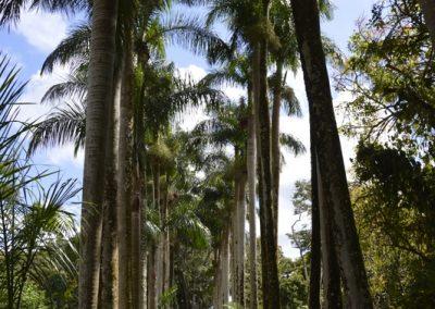 Palme, Botanični vrt Pamplemonses