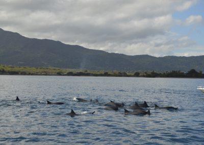 Iskanje delfinov